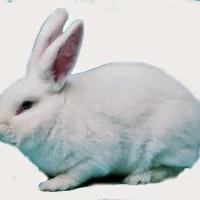 ✿ Bunny Breeds