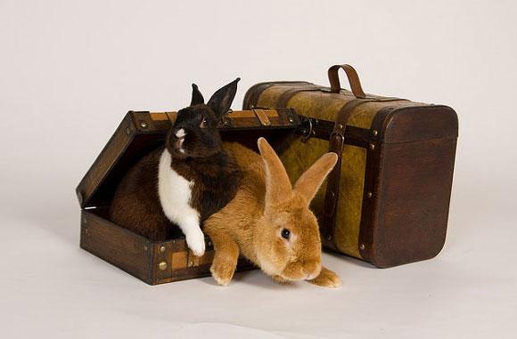 ΑΠΑΓΟΡΕΥΕΤΑΙ η τοποθέτηση ζώων στις αποσκευές του ΚΤΕΛ..