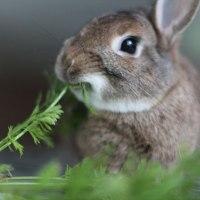 Η Αλφαβήτα της Διατροφής: Τι πρέπει & τι δεν πρέπει να τρώει..