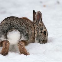 Φροντίζοντας το κουνέλι σας στο κρύο..