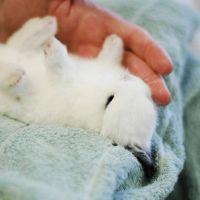10 Σημαντικές Συμβουλές για τη φροντίδα των Κουνελιών..