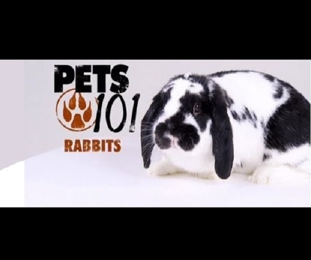 Pets 101 (Animal Planet)..
