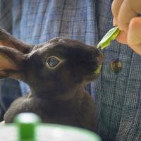 Πώς να εκπαιδεύσεις ένα κουνέλι..