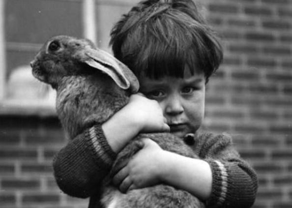 Η δύσκολη στιγμή της απώλειας - Τι πρέπει να πούμε σε ένα παιδί όταν απεβιώσει το κατοικίδιο..