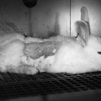 Ας μιλήσουμε για το Animal Testing..