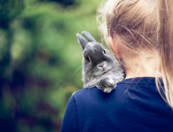 10 λόγοι που τα κουνέλια είναι τα καλύτερα κατοικίδια ζώα..