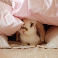 Μπορώ να δώσω κουβέρτα στο κουνέλι μου;